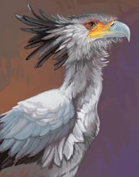 Secretary Bird by ANicB