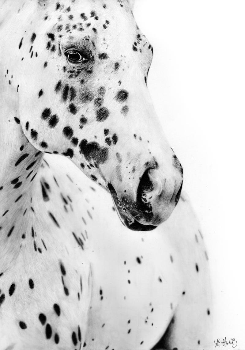 Appaloosa by EquineRibbon