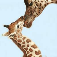 Giraffe calf and mother