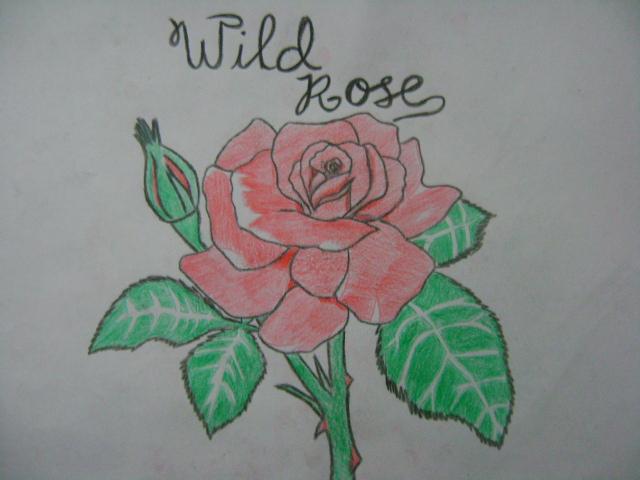 The Wild Rose by relentlessrevolver