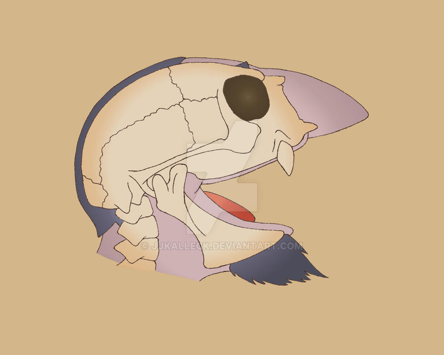 Count Von Count Skull by jjkalleck