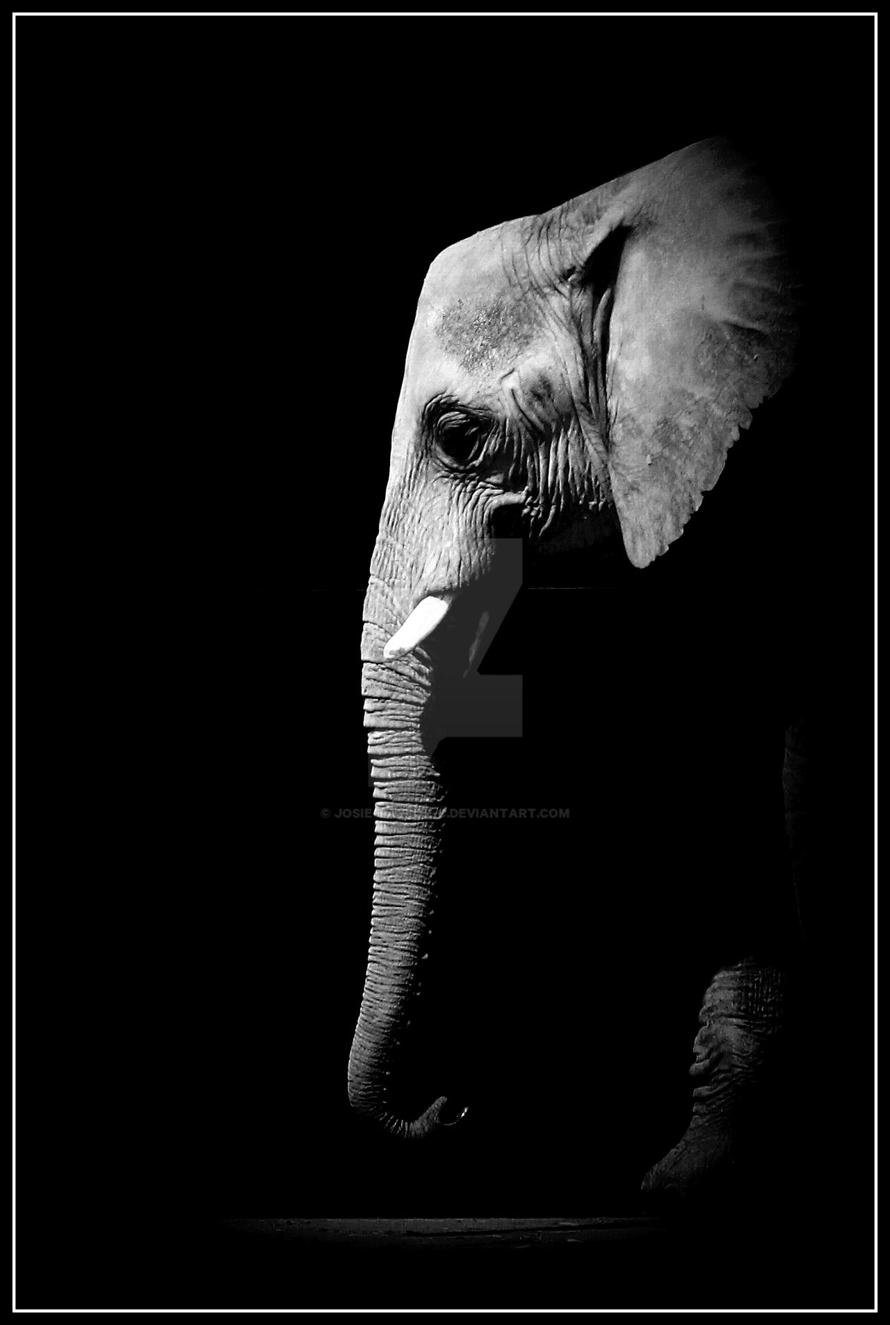 478 Elephant HD Wallpapers Background Images