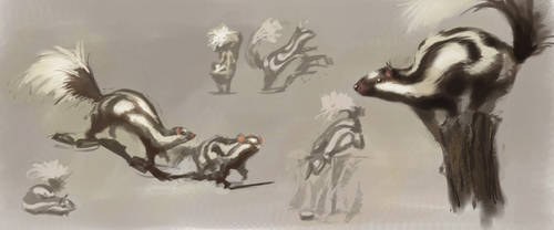 animal study: spotted skunk