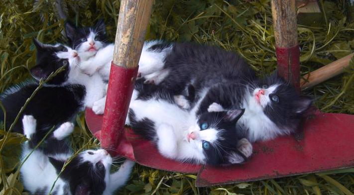 Kitties by Sunima