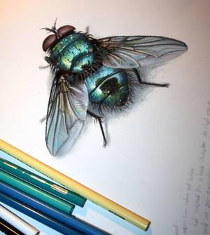fly study