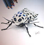 Giant leoplard moth