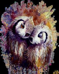 Owls v2
