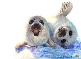 Baby seals by Sunima