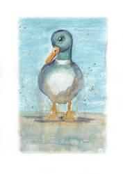 Duck 1 by PaulaHarris