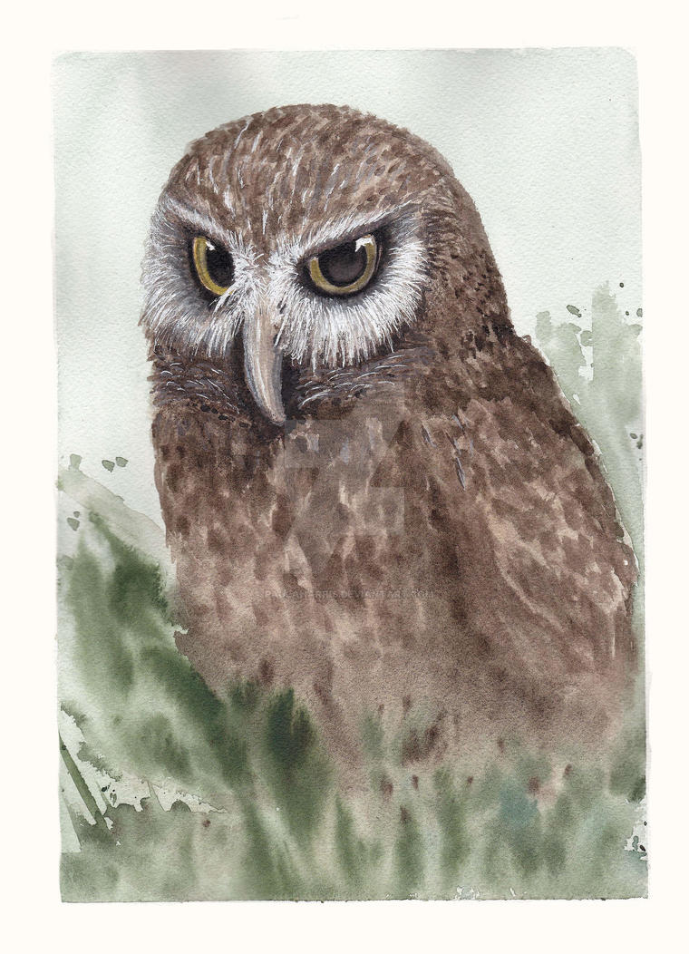 Owl by PaulaHarris