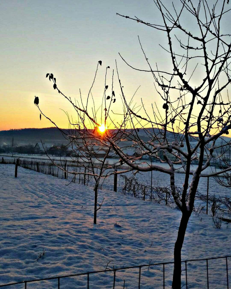 Winter mornings  by dianatodirica