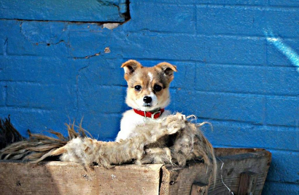 Puppy by dianatodirica
