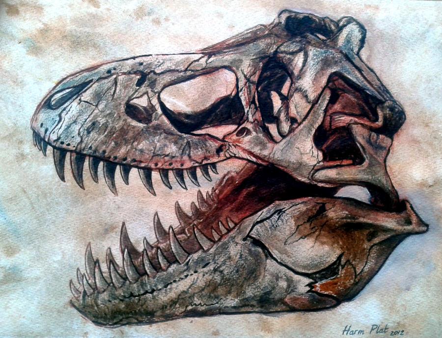 dinosaur skull tyrannosaurus 2 by watjong