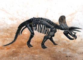 Triceratops skeleton by watjong