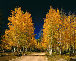 Forest Rd. 611, N. Kaibab NF, Arizona by StarTyger