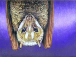 Mindoro Bat by afiriti