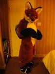 Soft fox gets ready