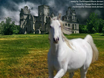 White Ghost Horse by TheWhisperOfSnow