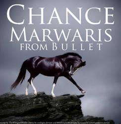 Chance Marwaris for B u l l e t by TheWhisperOfSnow