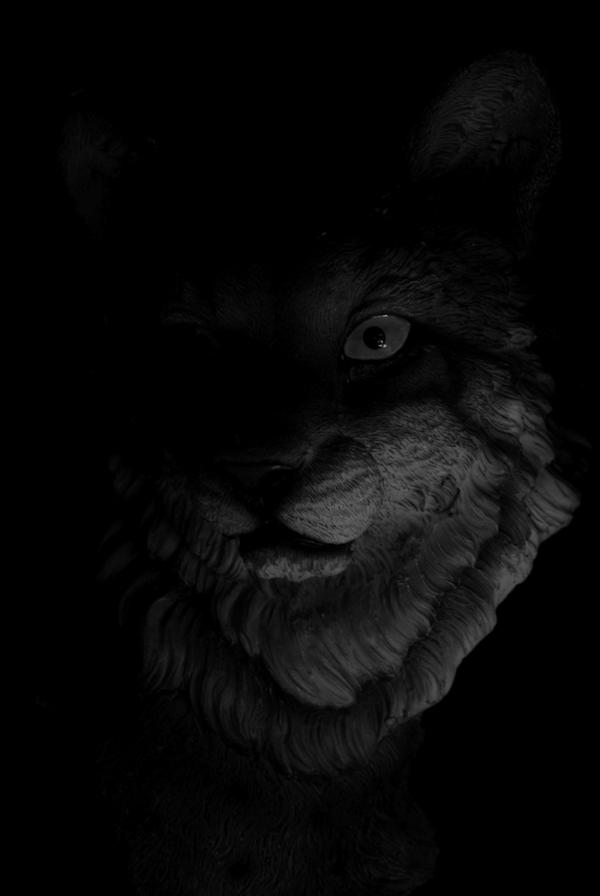 cat again by classicsmile