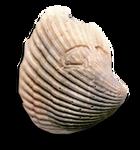 Gerosha Stone (Actual Size) by BulldozerIvan