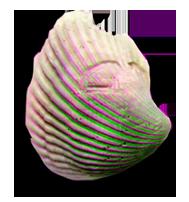 Gerosha Stone Actual Size 3D Green-Magenta by BulldozerIvan