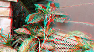 Flamingo Flower 3D