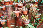 Lots of Pots 3D Red-Cyan