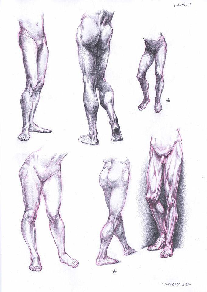 Anatomy Studies by Robolus on DeviantArt