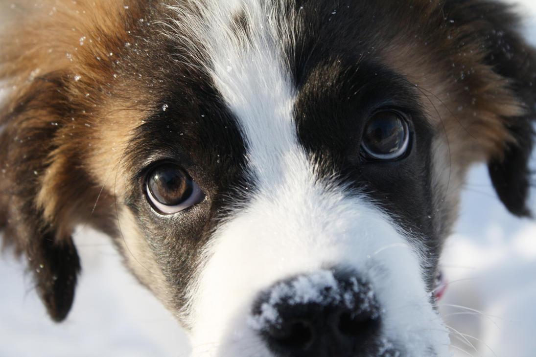 Ποιοι σκύλοι υιοθετούνται πιο γρήγορα; Τι έδειξε έρευνα...