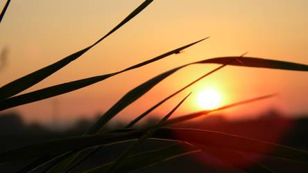 Sunrise _02