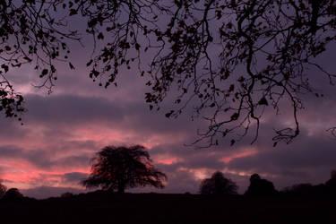 Purple Sunset by XS-Tarsier