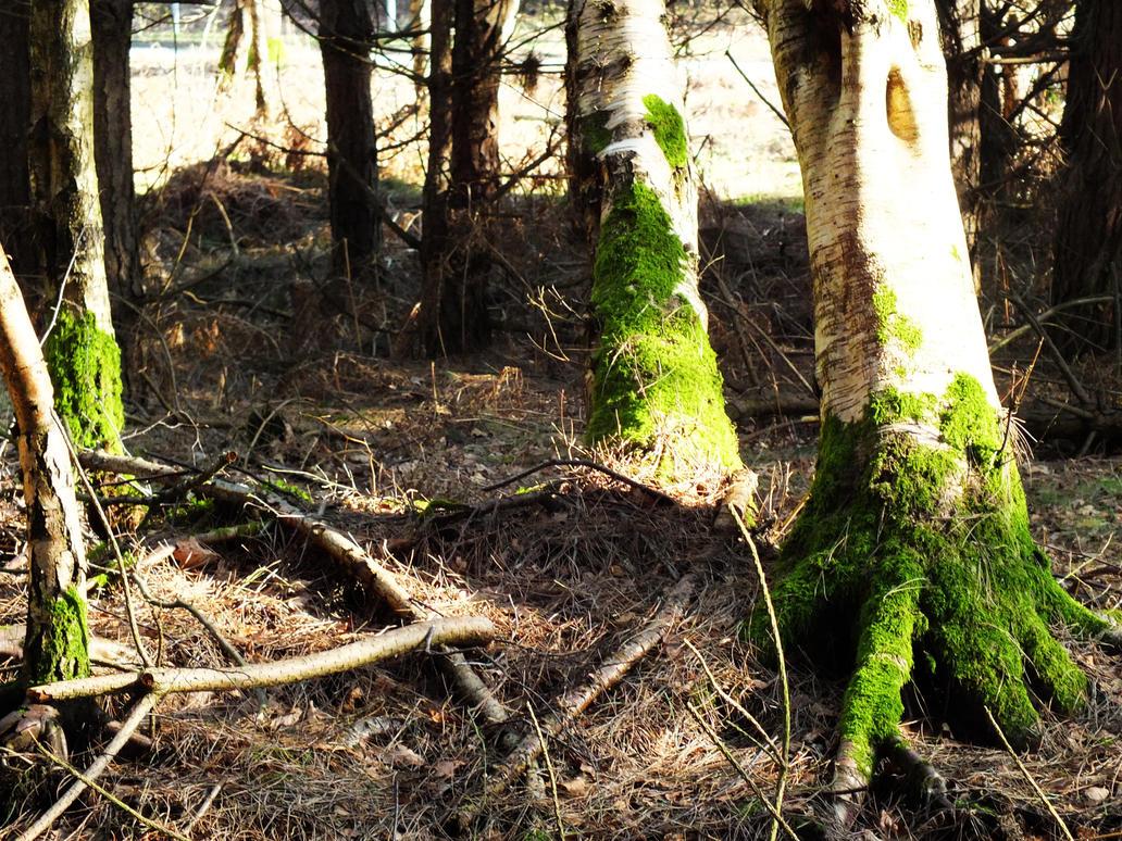 Moss by IchBinJayne