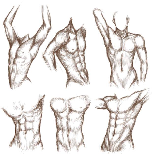 man body drawing - 593×604