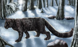 Snowbound Prowl