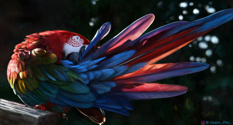 The elegant Macaw