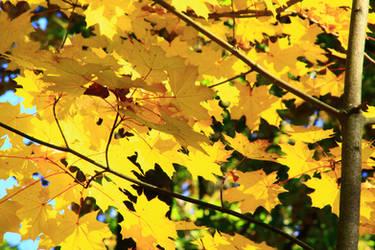 photo series autumn golden nostalgia 2018