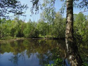 nostalgia 2014 a walk on forest lakes