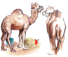 Camels from life by NynjaKat