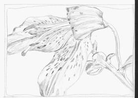 Flower 2 by Annette2