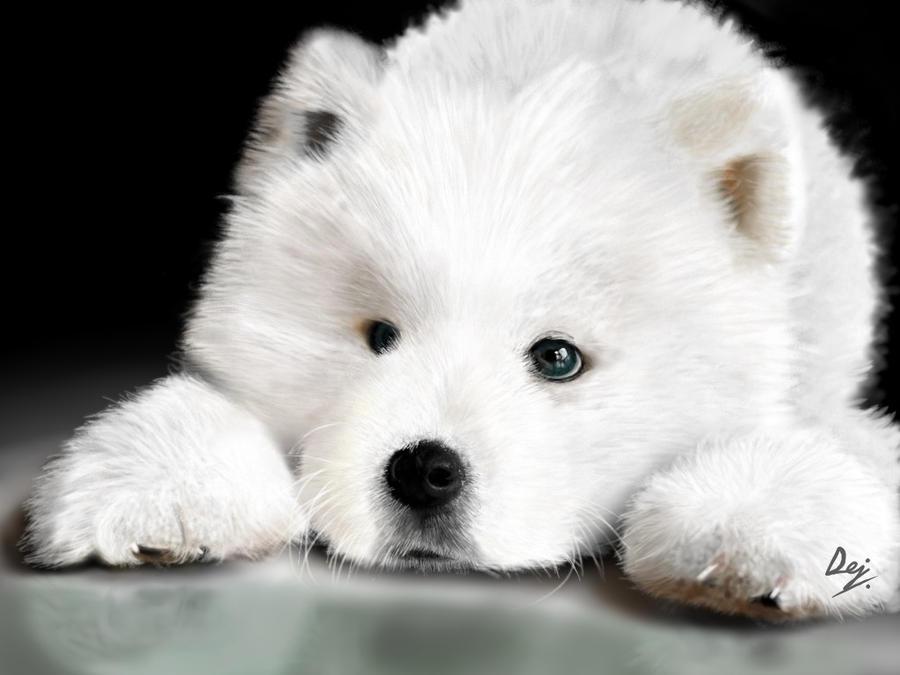 Dog Violet Eyes