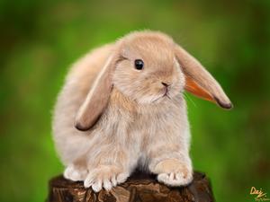 The Rabbit: iPad Drawing