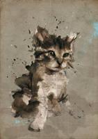 kitten : Azia by neo-innov