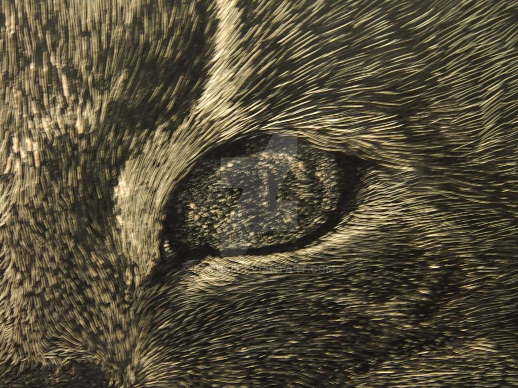 cat's eye by Rathsi