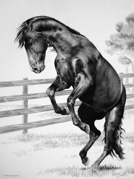 Pasture Dancer