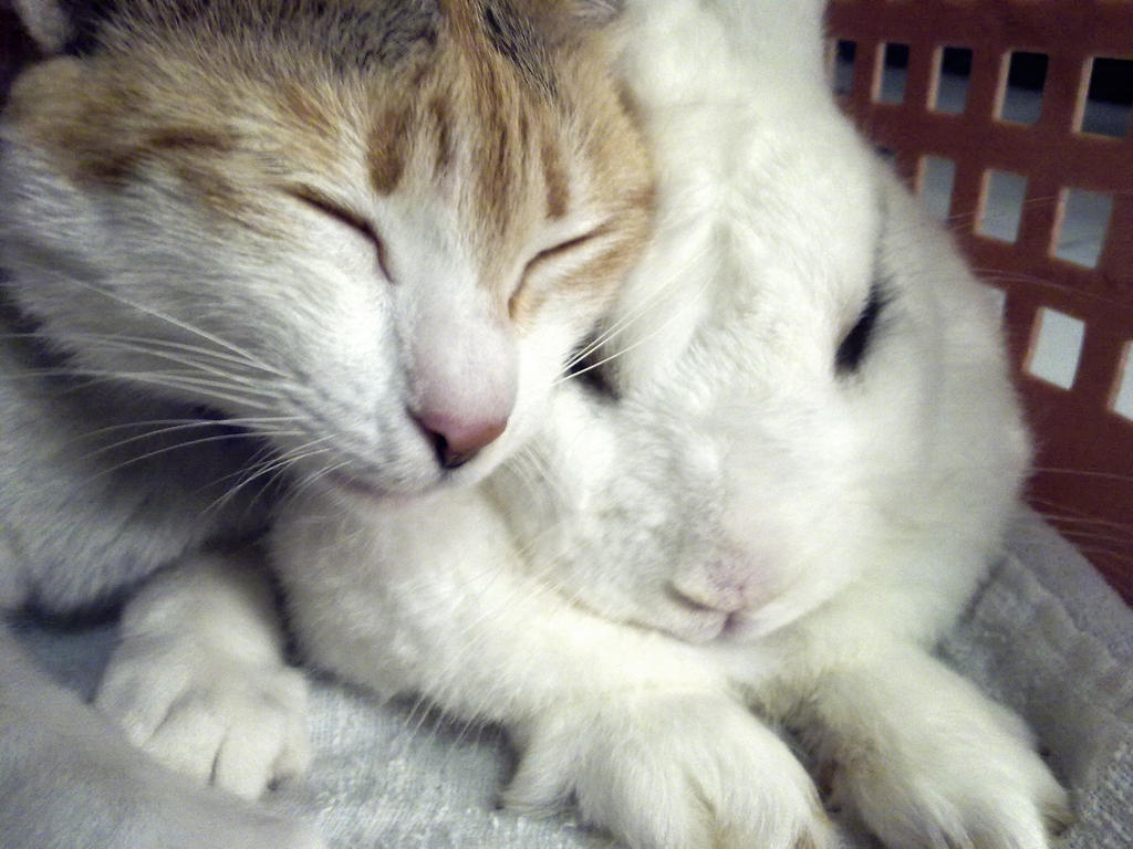 heke love bunny by ravenkhaw
