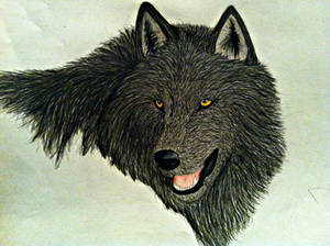 Coloured Wolf Drawing