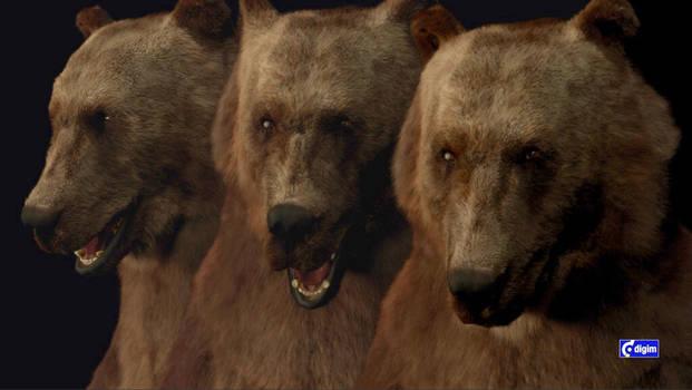 virtual Bear double