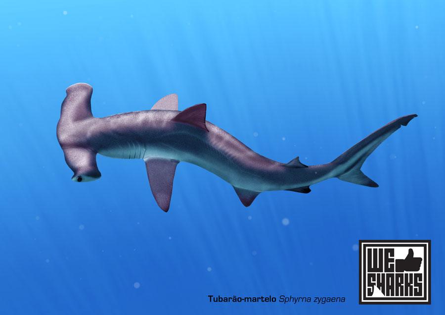 Smooth Hammerhead Shark by omnicogni on DeviantArt