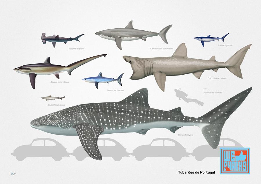 Portuguese Sharks by omnicogni on DeviantArt